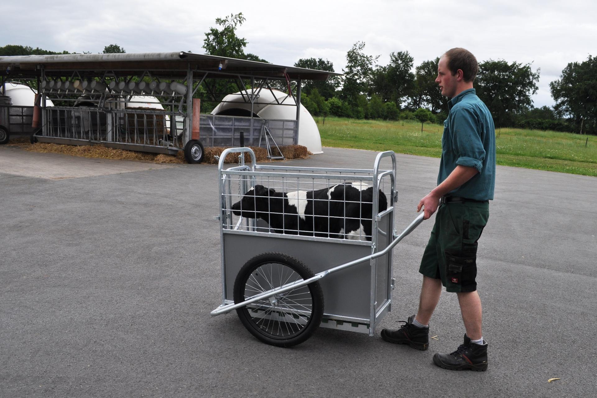 Ein Kalb wird im CalfBuggy über den Hof gefahren.